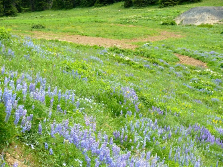 Bare dirt is visible on a portion of the Little Annie wedding site on July 11, normally festooned in July with meadow flowers.
