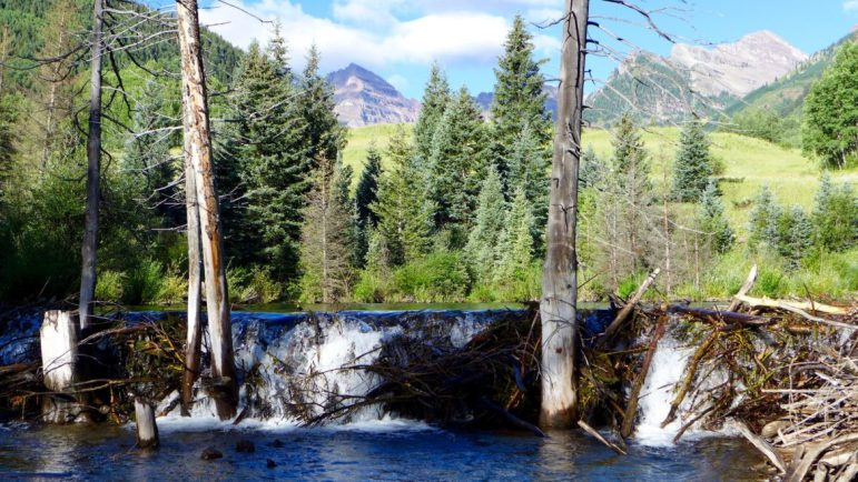 In a small bit of irony, there is a two-foot-tall beaver dam just below the location where Aspen has told the state it intends to build a 155-foot-tall dam - some day.