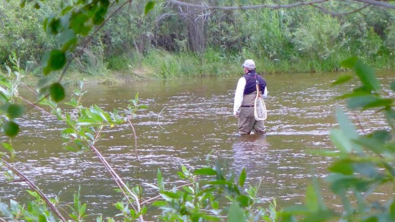 An angler on the Fryingpan River, in the flat section not far below the reservoir, with a flow of 250 cfs. Releases from Ruedi for the benefit of endangered fish in the Colorado RIver near Palisade have brought the river up to 300 cfs.
