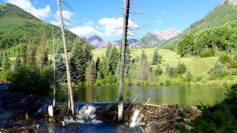 A beaver dam on Maroon Creek just upstream of the potential 155-foot-tall dam that would form Maroon Creek Reservoir.