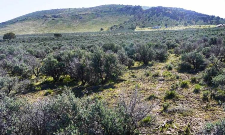 Picts-Last-Chance-Ranch-2.27-Acres-1-750x450