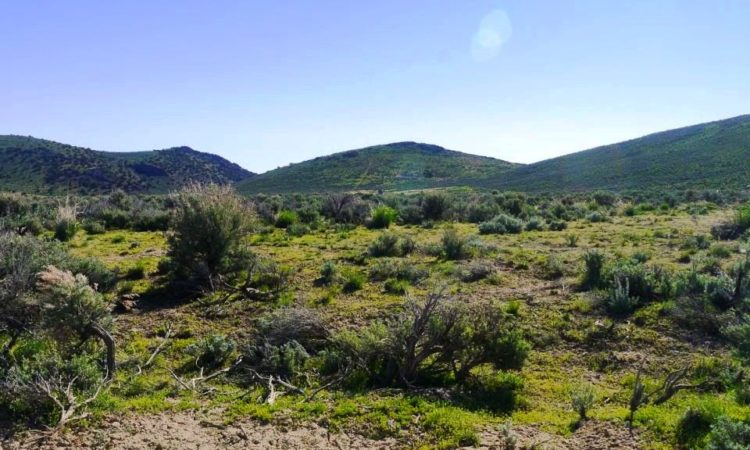 Picts-Last-Chance-Ranch-2.27-Acres-3-750x450