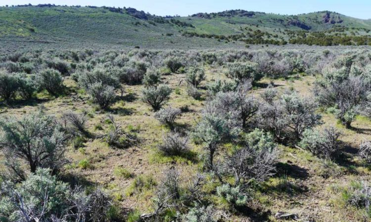 Picts-Last-Chance-Ranch-2.27-Acres-8-750x450