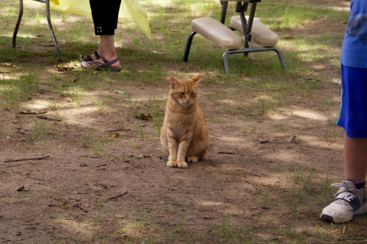 Visit from a stray cat