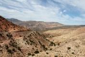 Macan_Marokko_5