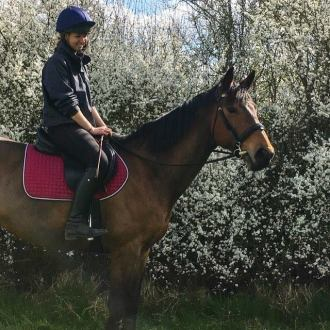 TACKROOM CHAT WITH: Robert Fowler from Castle Horse Feeds. Part 2: Robert answers feed questions from horse owners