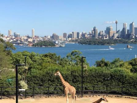 Zoo + City = Beautiful View