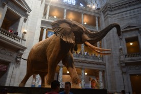 Glimpses of the Smithsonian Natural History museum