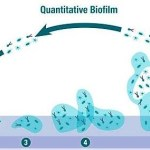 Diabetic Foot Infection, Biofilm & New Management Strategy