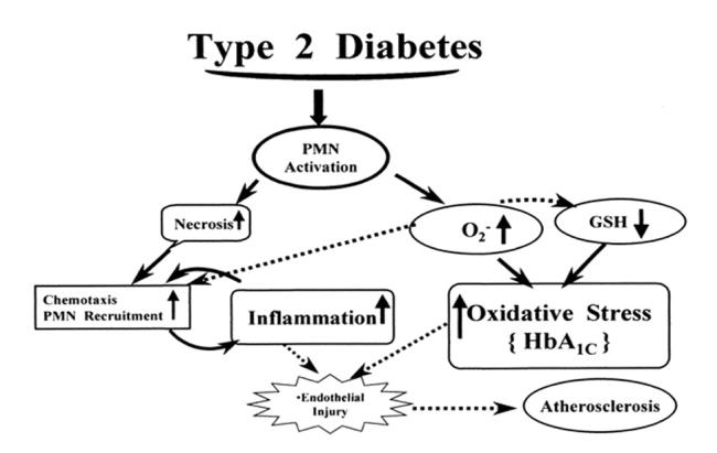 Commentary: The Effects of Inflammation, Aging, and Oxidative Stress on the Pathogenesis of Type II Diabetes