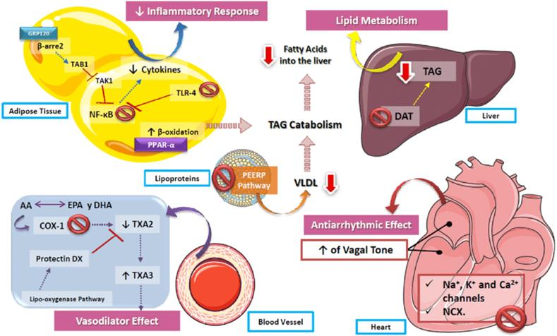 Functions of Omega-3 and Omega-6 in Prevention and Fighting Cardio-Metabolic Complications