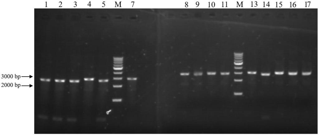 Prevalence of Zoonotic Pathogens in Domestic and Feral Cats in Shanghai, with Special Reference to Salmonella