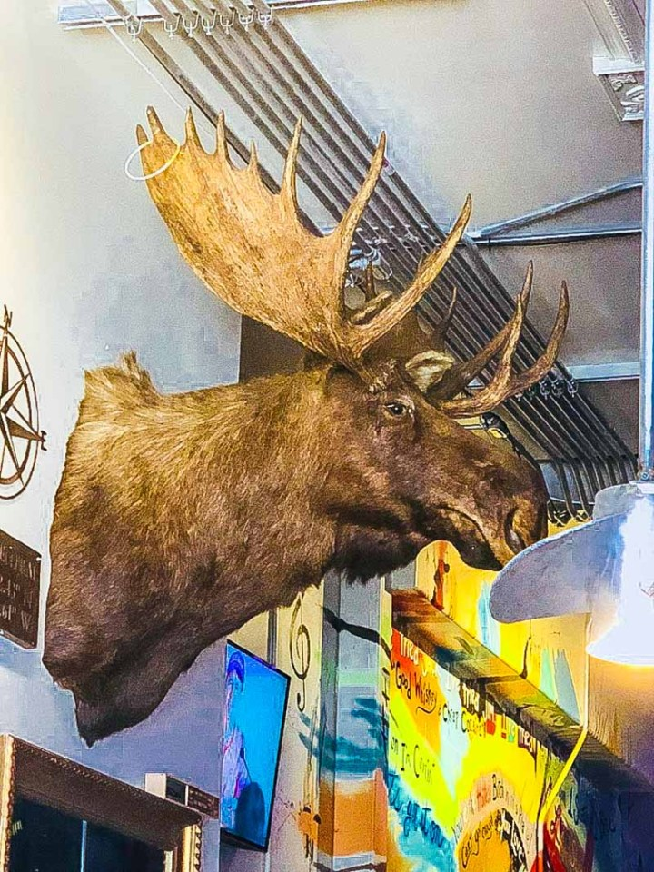 Moose head on wall in Duval Central bar