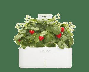 Smartpot Strawberries