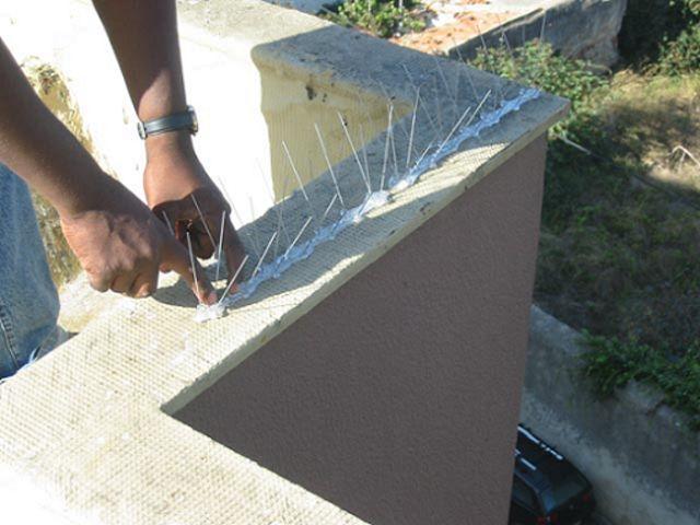 Controle de Pombos em Franco da Rocha