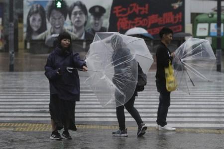 umbrellashib.jpg