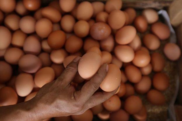 4 Cara Pilih Telur Bagus yang Masih Segar, Tips dari Ahli Halaman all - Kompas.com