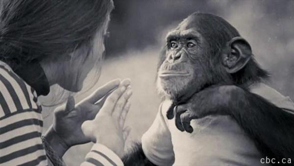 Apakah Hewan Berbahasa Seperti Manusia?