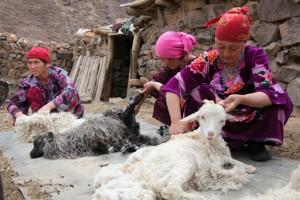 Shearing goats in Tajikistan.