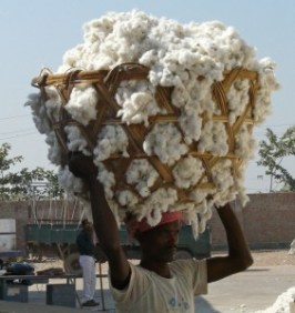 Basket of white cotton in India.