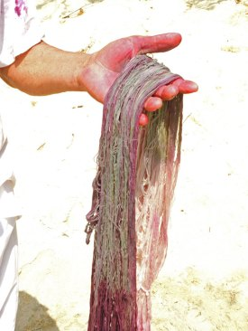 The dye begins to oxidize the cotton, turning shades of green to purple.