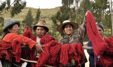 Nilda Callañaupa from CTTC raises cochineal-dyed yarn after a successful dye day in Acopia, Peru.
