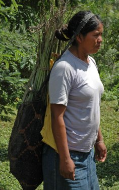 Coop member carrying the harvested dajudie plant in the traditional bag. Photo by Ines Hinojosa.