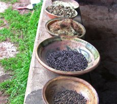 Dried cochineal in center bowl, ready for use in dyeing.