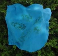 Fresh leaf indigo sample.