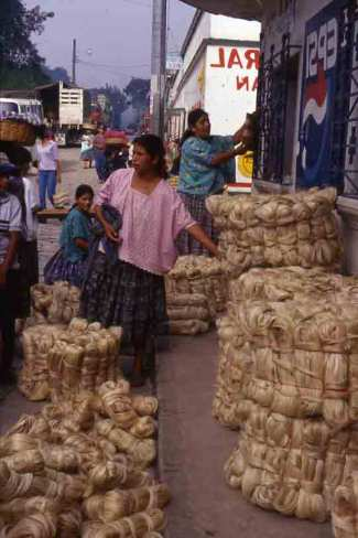 Selling maguey bundles in the market.