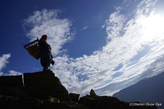 Tsering overlooking the plateau. Photo credit: Stanzin Dorjai