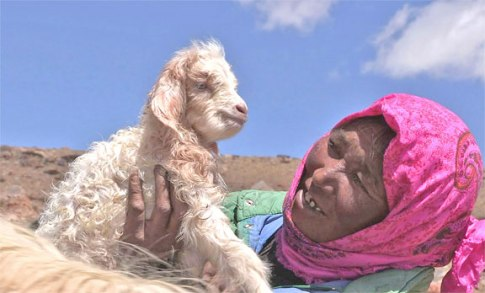 Tsering tenderly welcomes a newborn goat into the fold (photo courtesy Linda Nesbitt Cortright, Wild Fibers Magazine).