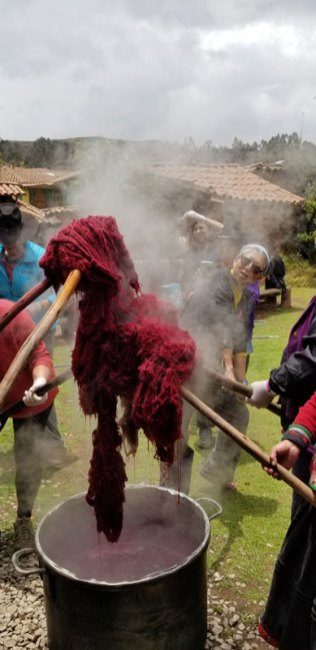 Alpaca yarn dyes with cochineal.
