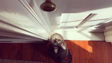 Mais pourquoi les chats ne supportent pas les portes fermées ?