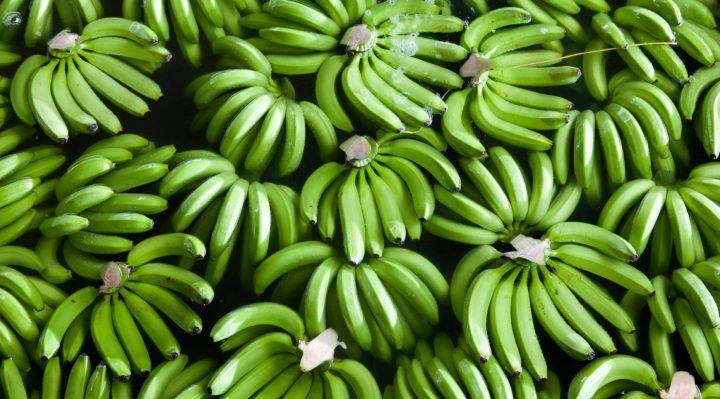 Vibra Saúde, https://www.vibrasaude.com/alimentacao/biomassa-de-banana-verde/
