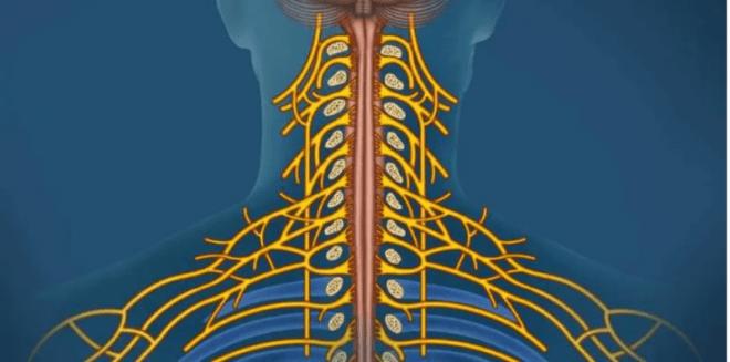 7 طرق لتحفيز العصب المبهم لمكافحة الالتهاب والاكتئاب والصداع النصفي