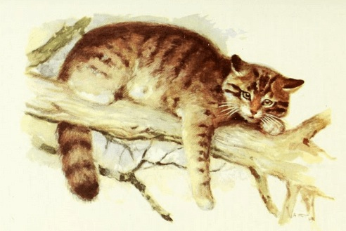 An illustration for the story The Patient Cat by the author Laura E. Richards
