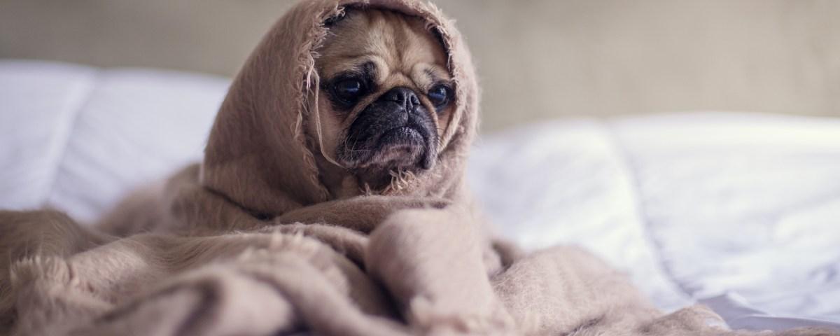 Pet Health Emergencies After Hours - Danville KY