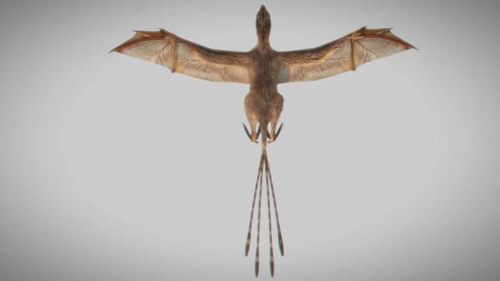 Bat-Wing Dinosaur