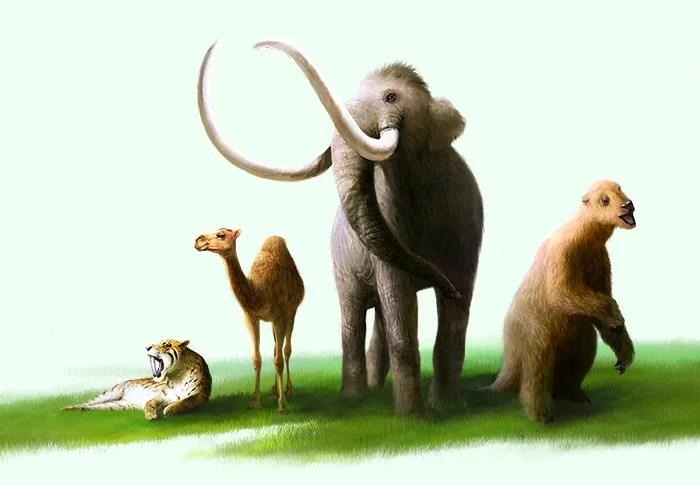 La Brea Animals