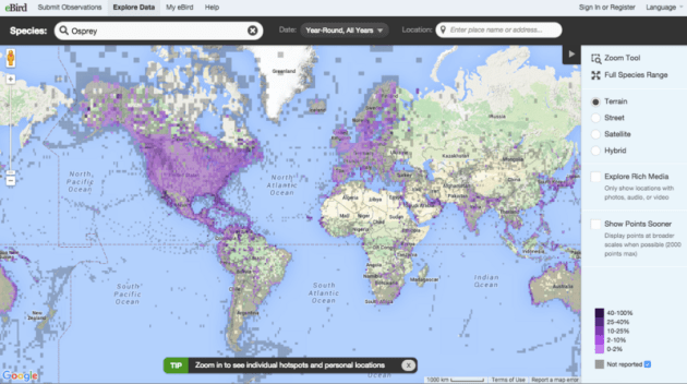 bird migration map » World Maps Wallpaper | Free Maps