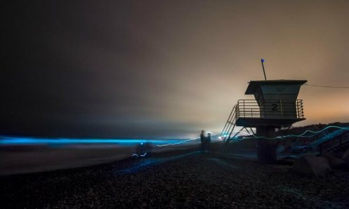 Bioluminescence in San Diego. The natural event has been likened to 'breaking a light stick.'