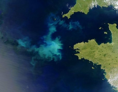 See how the water greens when  more phytoplankton arrive.
