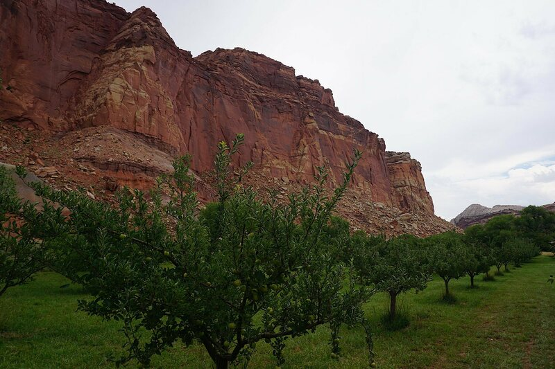 Capitol Reef National Park in Utah has one of the largest orchards in the national park system.