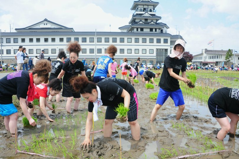 Villagers plant rice at one of the sites.