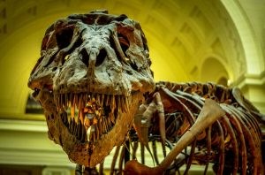 The thorny problem of gathering every T. rex to ever live