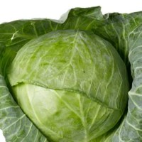 Cabbage is a Winter Vegetable