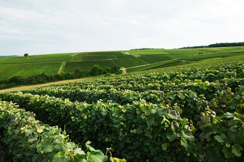 Hip young growers are finding virtues in previously ignored subregions like the Aube.