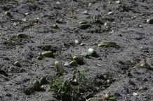 Smashing Eggs, Dumping Milk: Farms Waste More Food Than Ever Due to Global Coronavirus Pandemic
