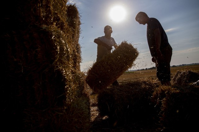 Crop Prices Soar to 8-Year High, Renewing Food Inflation Fears - Bloomberg